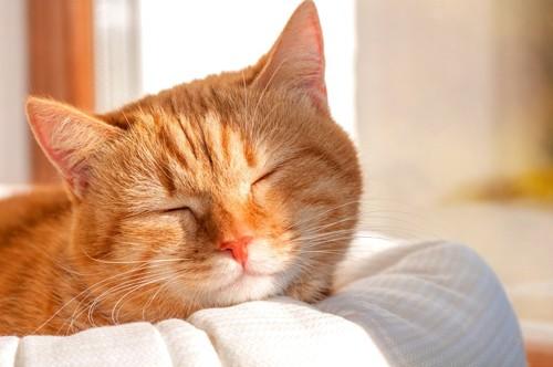日なたで寝る猫