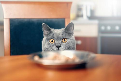 椅子に座ってテーブルの上のフードを見る猫