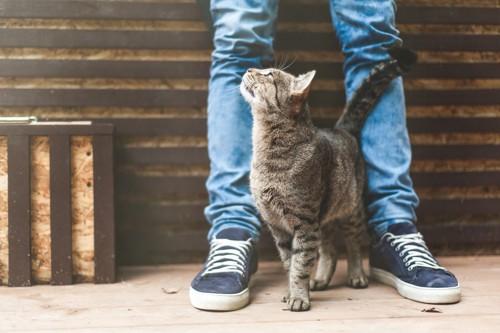 尻尾を垂直にあげ足元にくる猫