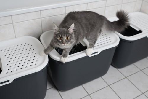猫トイレとその上に乗る猫