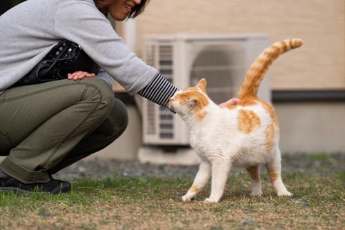 お尻付近を撫でられる猫