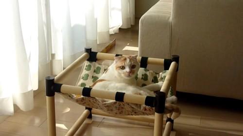 ハンモックに乗ってカメラの方を見る猫