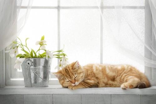 窓辺で眠る猫