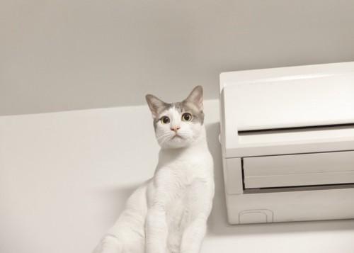 空調機と猫