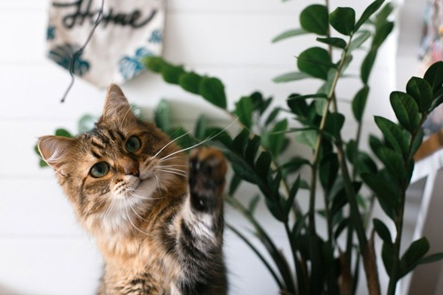 葉っぱを触ろうとする猫