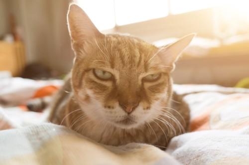 すごい顔の猫
