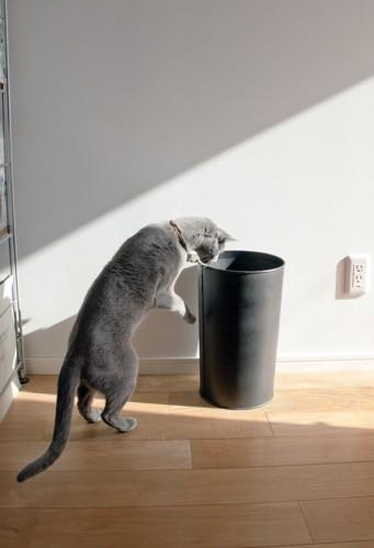 ゴミ箱を覗く猫
