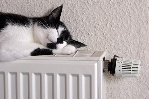 暖房に乗って眠る猫