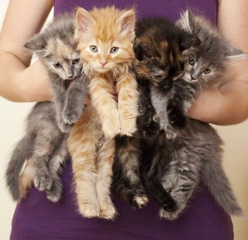 四匹の子猫