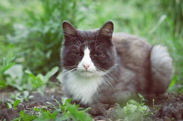 草原に居る黒と白の猫