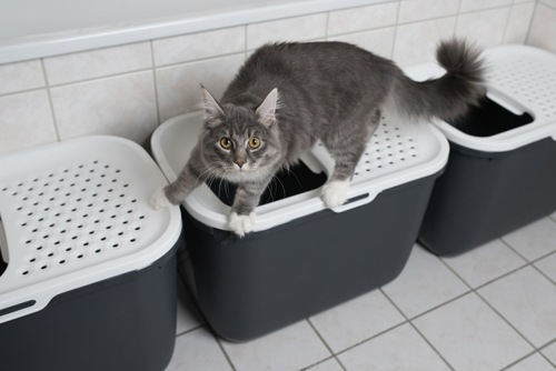 トイレの上で走り出しそうな猫