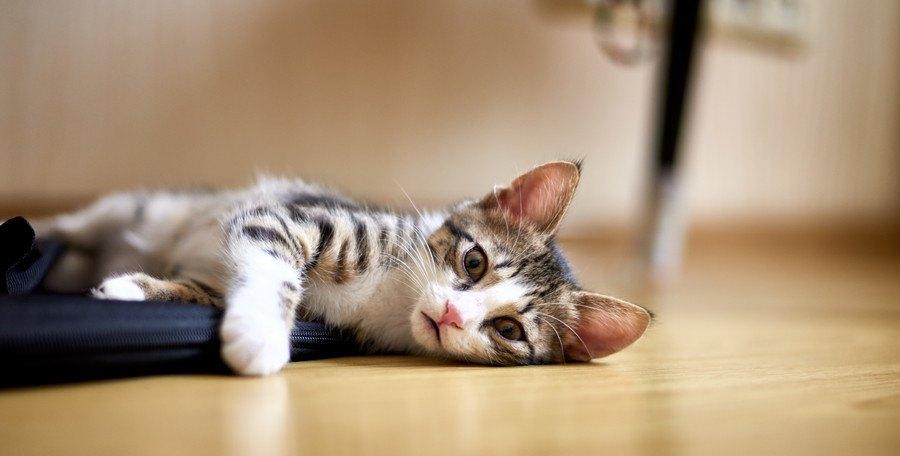構ってほしそうな猫