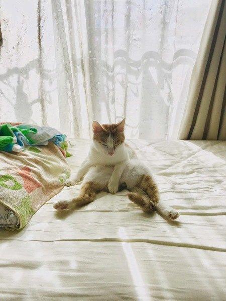 日なたにいる猫