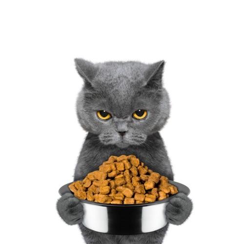 ドライフードを持つグレーの猫