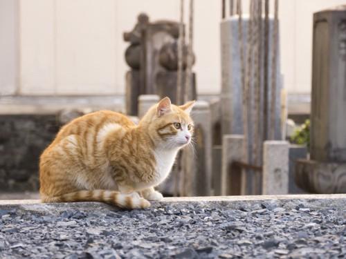 墓場にいる猫