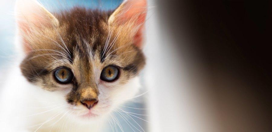 つぶらな瞳で見つめる子猫
