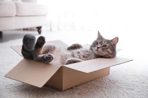 箱に入りつまらなそうな猫