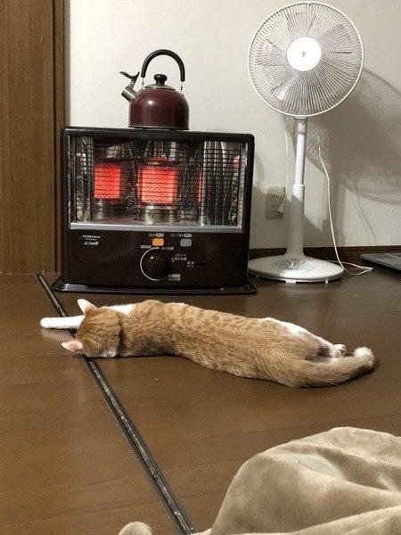 ストーブの前で体をのばして寝る猫
