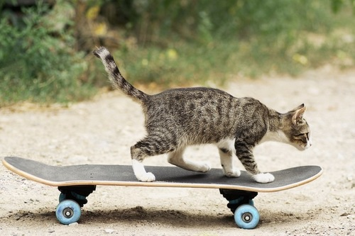 スケートボードに乗る猫