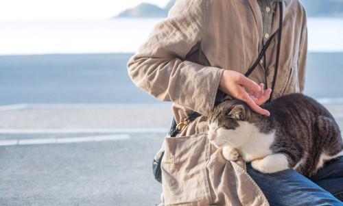 海辺で甘える猫