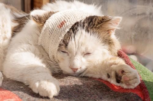 頭に傷がある猫
