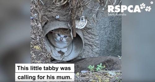 排水管の中に子猫