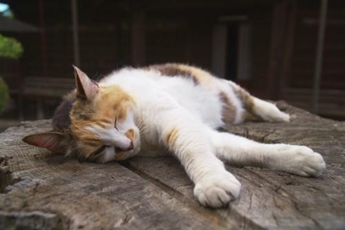 切り株の上で横になっている猫