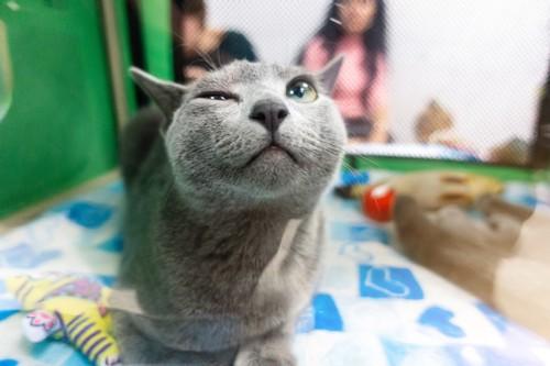 策士なウィンクをする猫