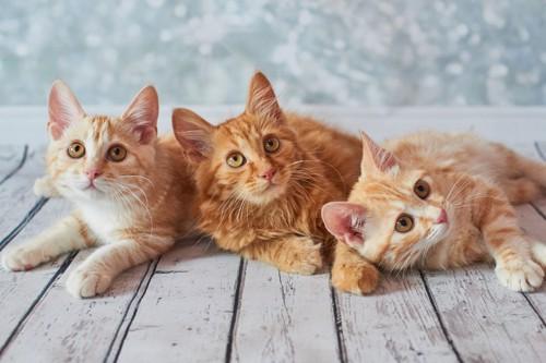 寝そべって上を見る3匹の子猫