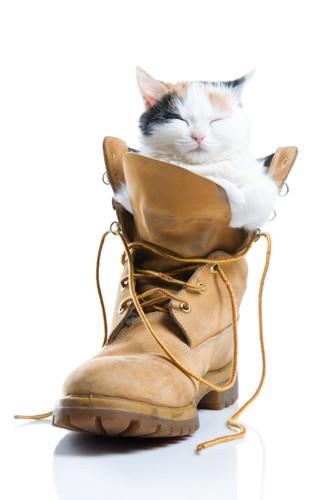 ブーツの中に入って眠る猫