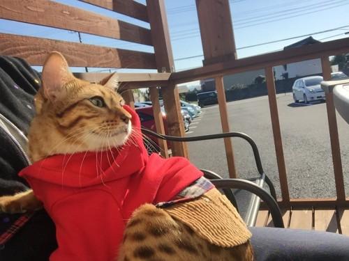 秋空の中ベンチで休憩する猫