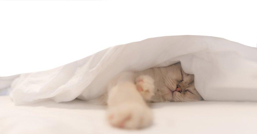 布団の中に隠れて眠る猫