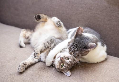 猫に八つ当たりする猫