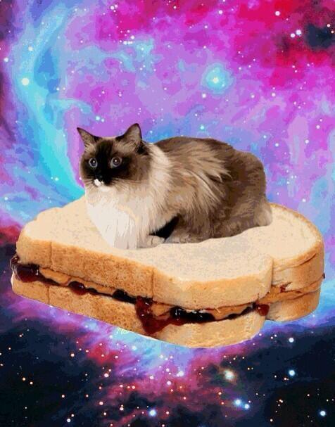 パンに乗った猫
