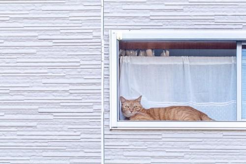 窓際で横たわっている猫