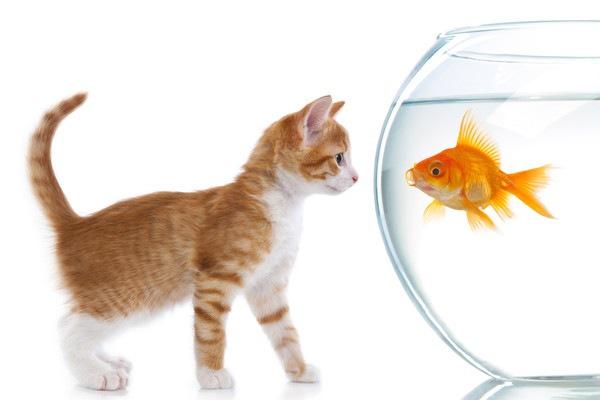 金魚鉢をみる猫