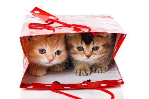 紙袋の中の2匹の猫