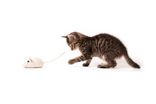 ネズミのおもちゃを追いかける子猫