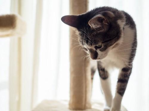 タワーから下を見る猫