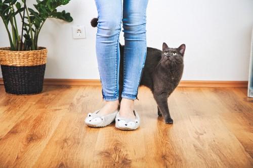人の足元で見上げる猫