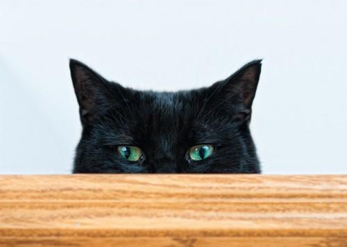 テーブルの下から顔をのぞかせる黒猫