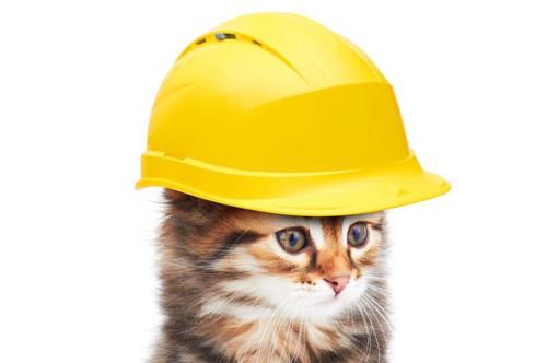 安全第一のネコ