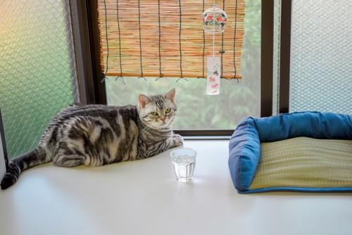 すだれと風鈴と猫