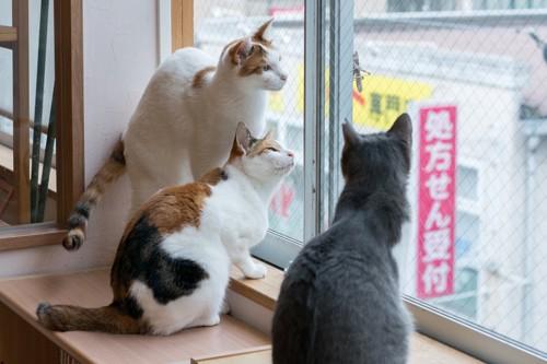 にゃんぱく写真館作品3