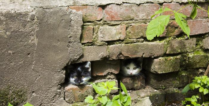隙間にいる猫達