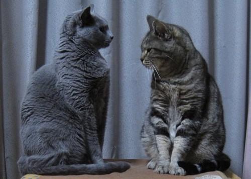 2匹の猫が向かい合っている