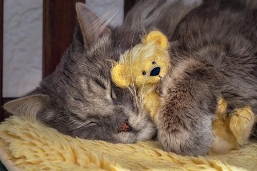 ぬいぐるみを抱っこして眠る猫
