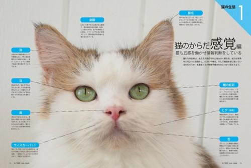 03_ねこ検定公式ガイド「猫のからだ感覚編」
