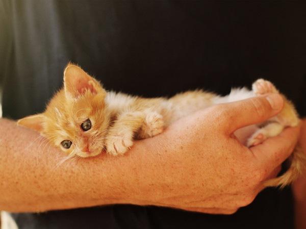 手に抱えられている捨て猫