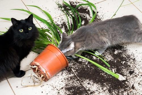いたずらする猫たち